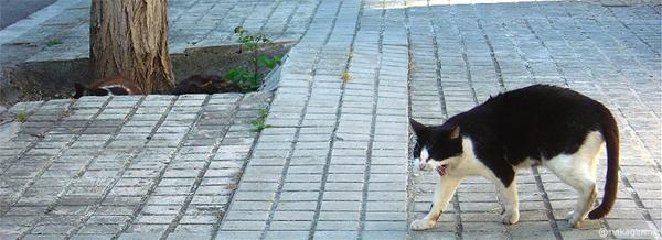 バルセロナの大あくび猫